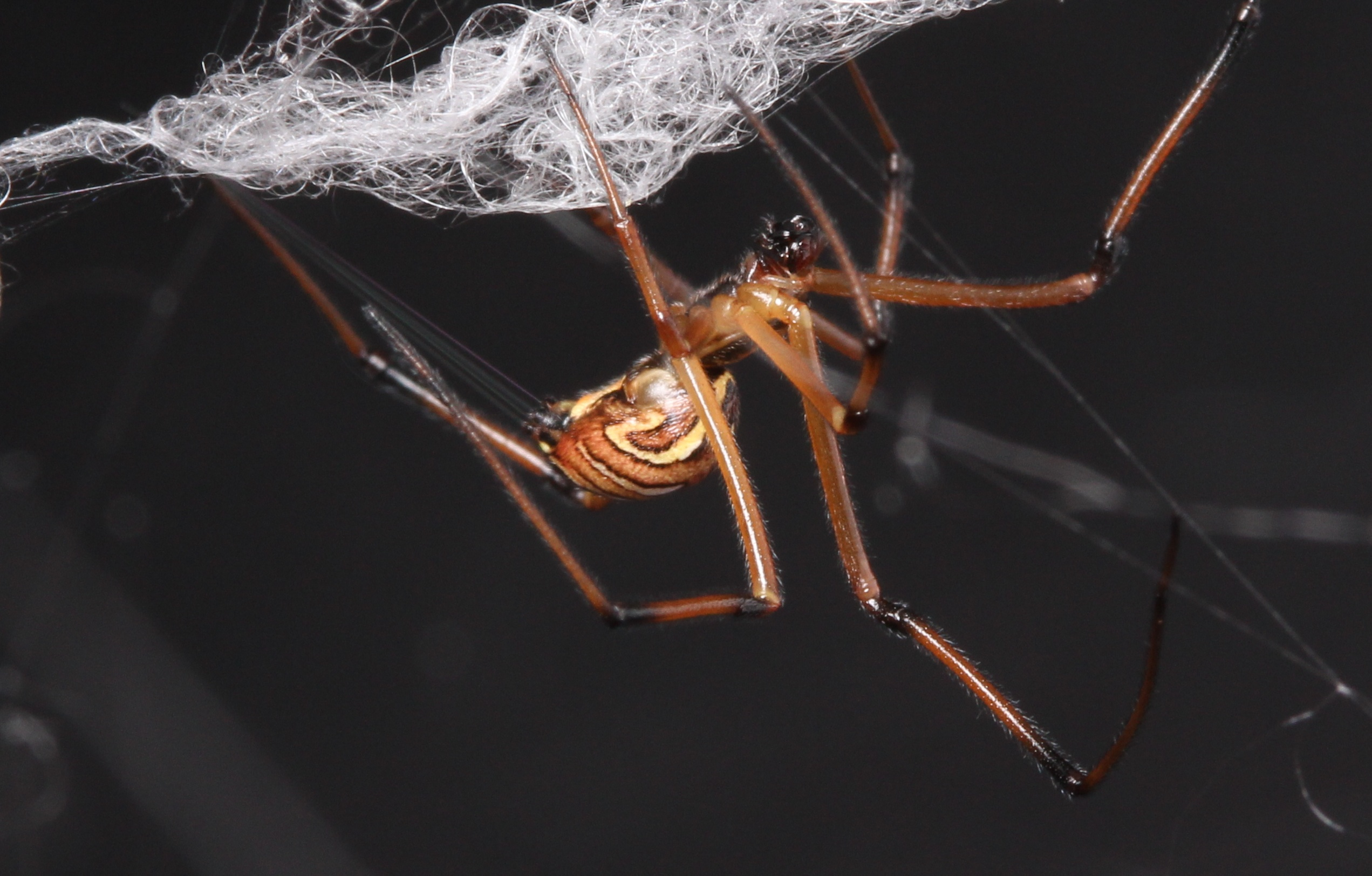 male_wrapping_Web