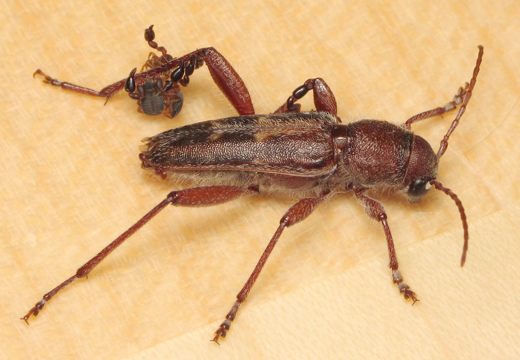 pseudoscorpion and beetle relationship trust