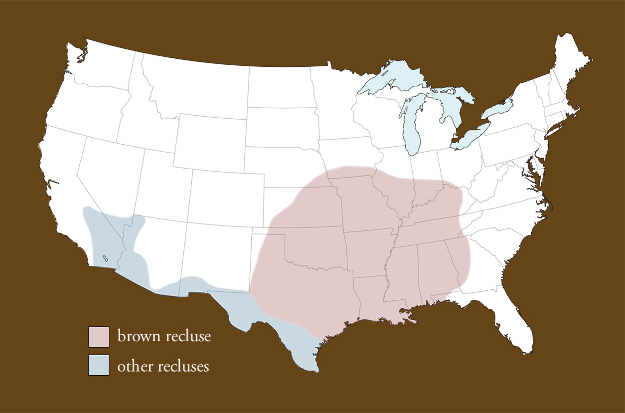 Recluse Or Not Spiderbytes - Black widow spider us map