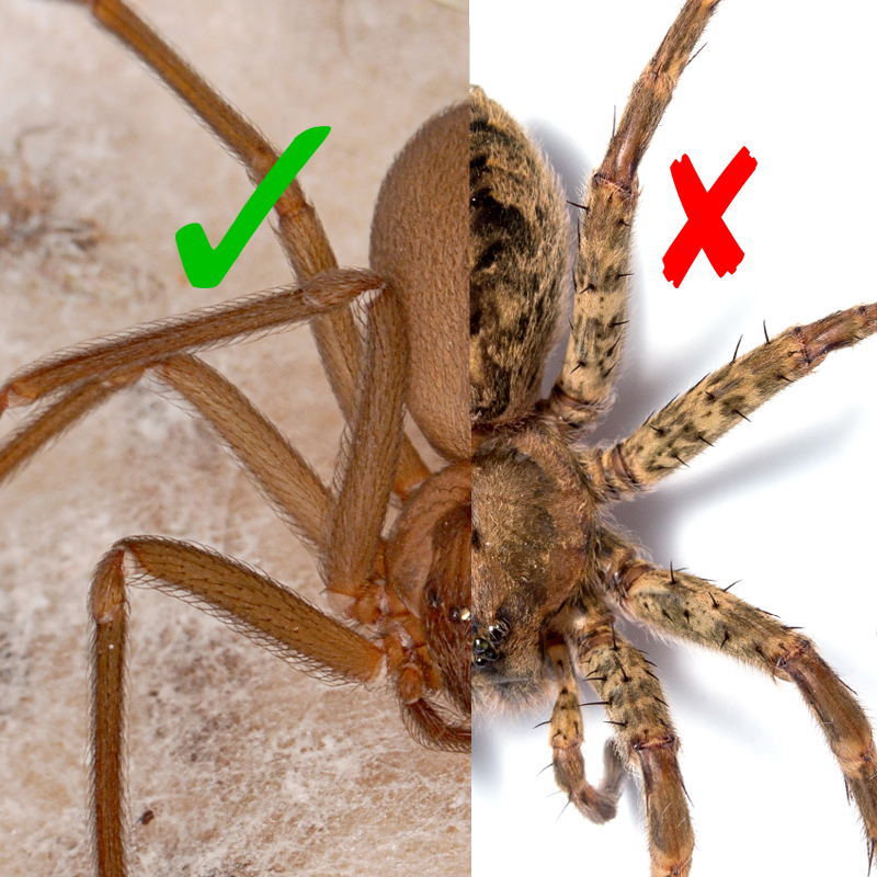 Recluse or not spiderbytes for How to stop spiders coming in your house