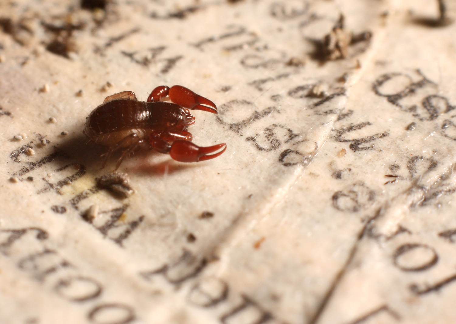 book_pseudoscorpion_edited