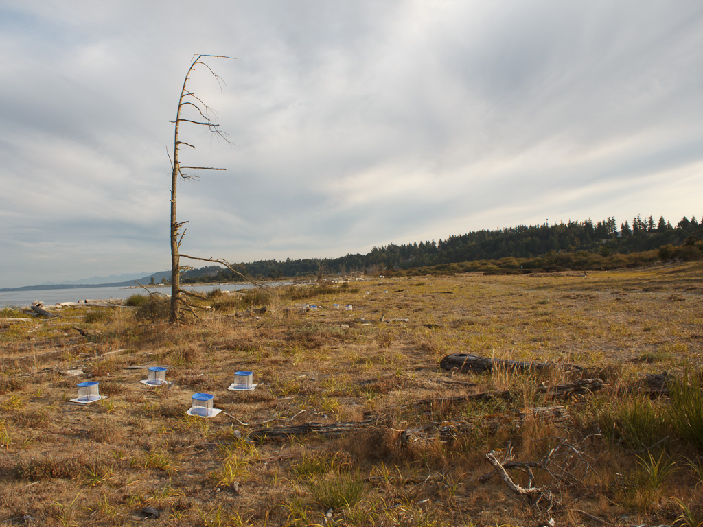 IVB_transect_wide_viewIMG_0474